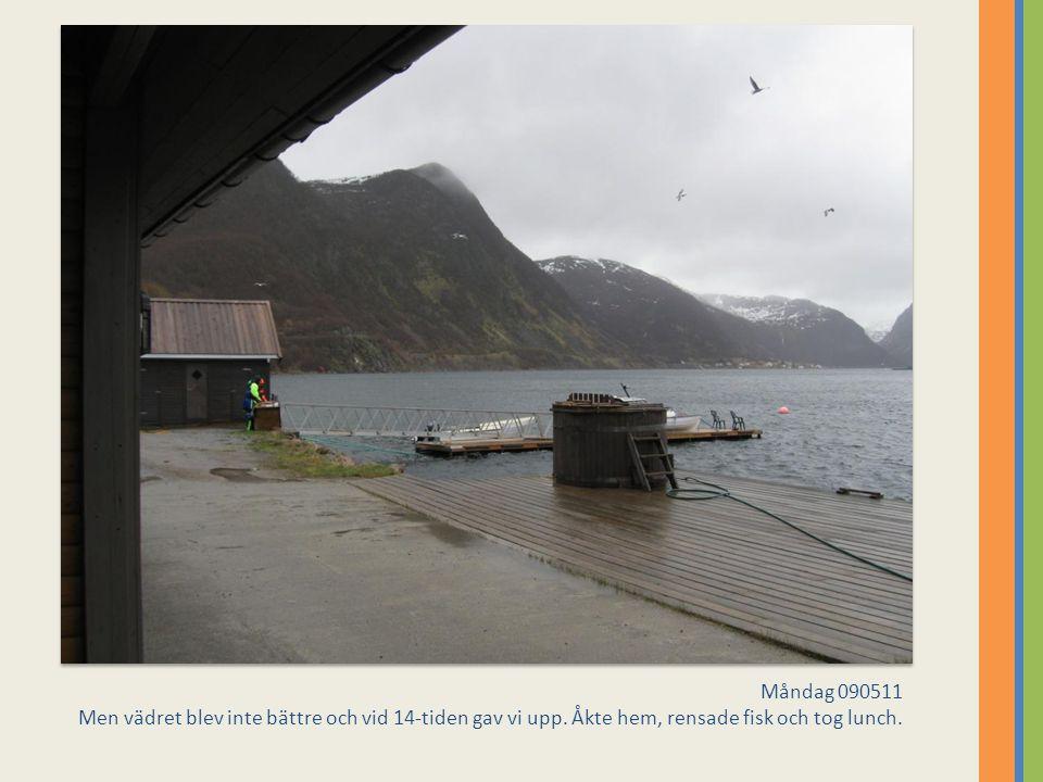 Måndag 090511 Men vädret blev inte bättre och vid 14-tiden gav vi upp. Åkte hem, rensade fisk och tog lunch.