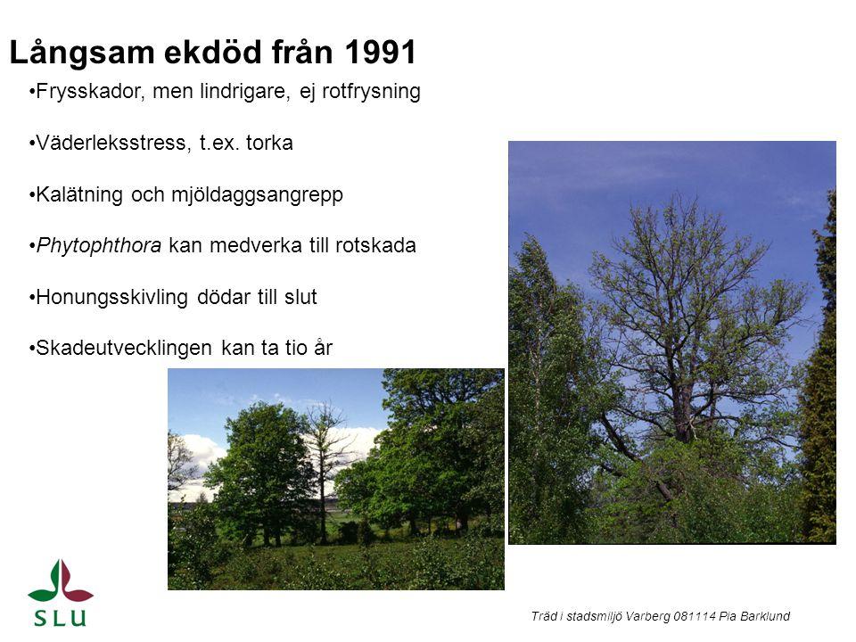Träd i stadsmiljö Varberg 081114 Pia Barklund Frysskador, men lindrigare, ej rotfrysning Väderleksstress, t.ex. torka Kalätning och mjöldaggsangrepp P