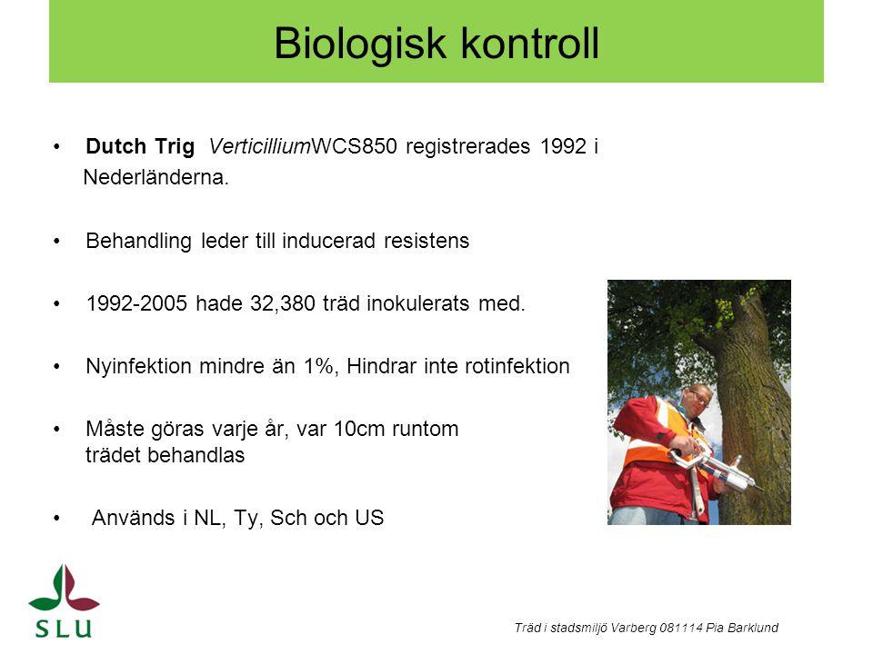 Andra kontroll strategier mot almsjukan - Minska spridningen av almsplintborrar, genom att destruera all almved från angripna träd, I Hamburg kombination ta bort döende träd + Dutch Trig, lyckas hålla nyinfektion under 1%.