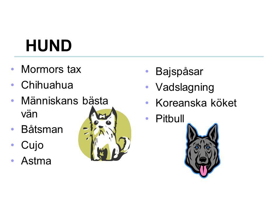 HUND Mormors tax Chihuahua Människans bästa vän Båtsman Cujo Astma Bajspåsar Vadslagning Koreanska köket Pitbull