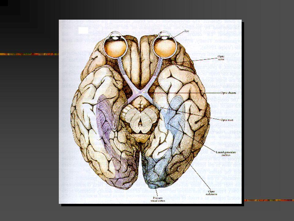 Synfunktion synskärpa detaljseende synfält färgseende mörkerseende kontrastseende samsyn visuell perception-kognition