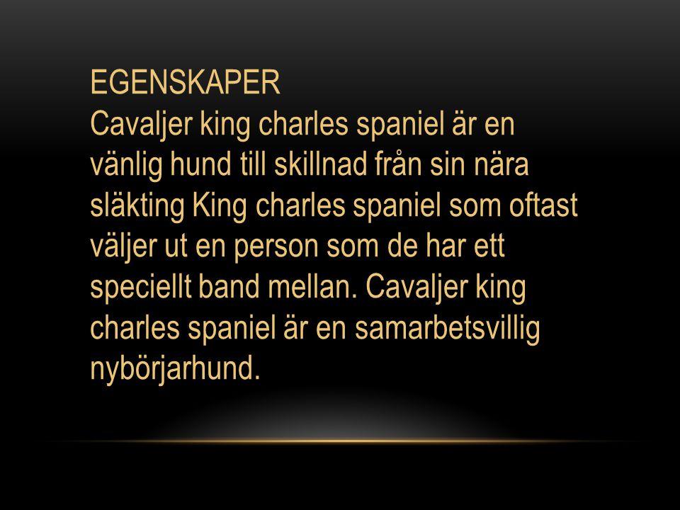 EGENSKAPER Cavaljer king charles spaniel är en vänlig hund till skillnad från sin nära släkting King charles spaniel som oftast väljer ut en person som de har ett speciellt band mellan.