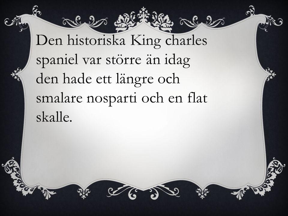 Den historiska King charles spaniel var större än idag den hade ett längre och smalare nosparti och en flat skalle.