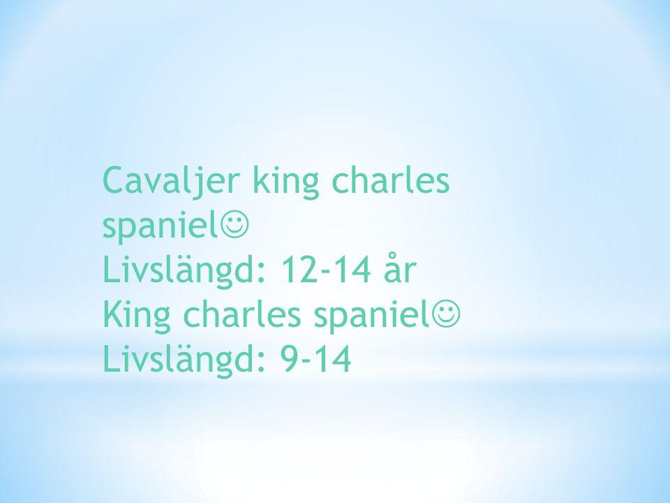 Cavaljer king charles spaniel Livslängd: 12-14 år King charles spaniel Livslängd: 9-14
