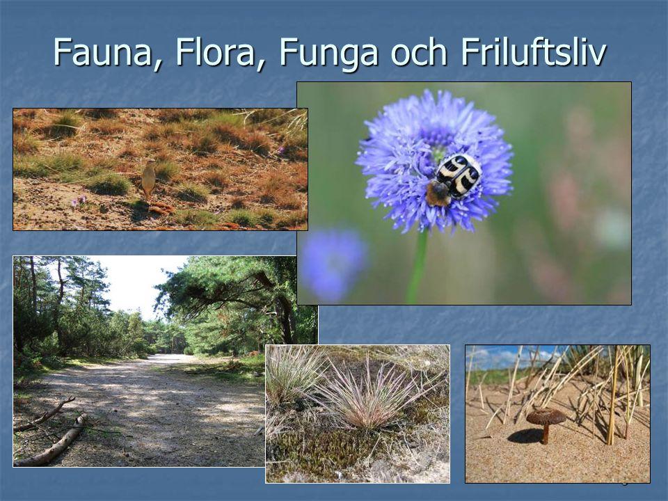 3 Fauna, Flora, Funga och Friluftsliv