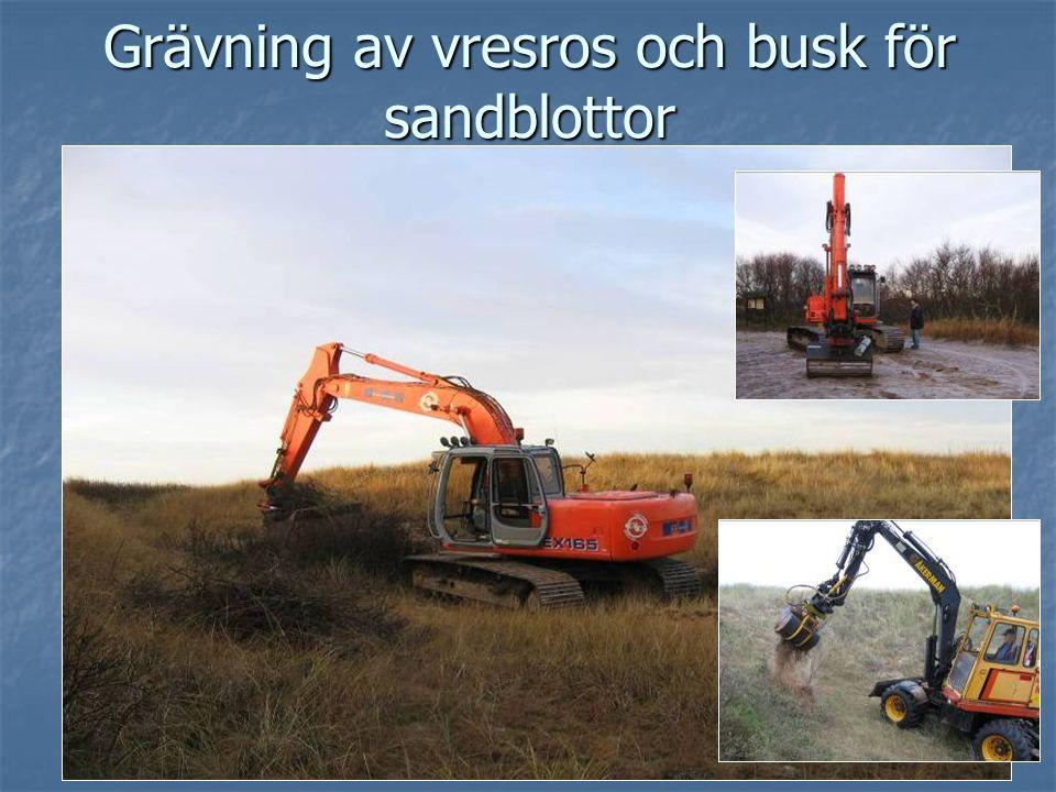 7 Grävning av vresros och busk för sandblottor