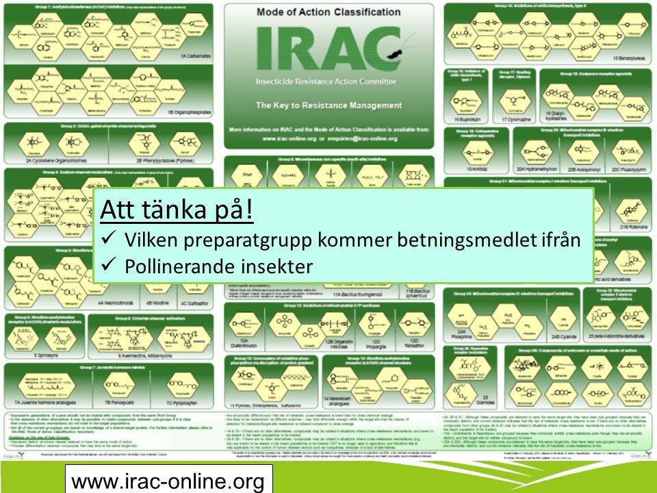 www.irac-online.org Att tänka på.