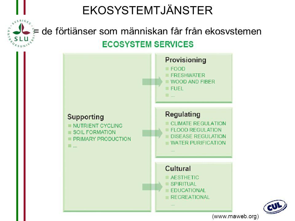 20 EKOSYSTEMTJÄNSTER = de förtjänser som människan får från ekosystemen (www.maweb.org)