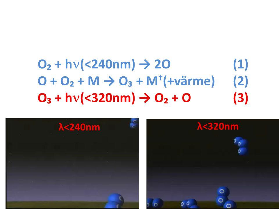 O₂ + h (<240nm) → 2O(1) O + O₂ + M → O₃ + M † (+värme)(2) O₃ + h (<320nm) → O₂ + O(3) λ<240nm λ<320nm