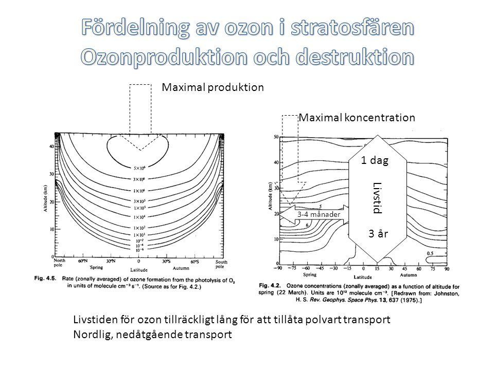Livstiden för ozon tillräckligt lång för att tillåta polvart transport Nordlig, nedåtgående transport Maximal produktion Maximal koncentration 3-4 månader Livstid 1 dag 3 år
