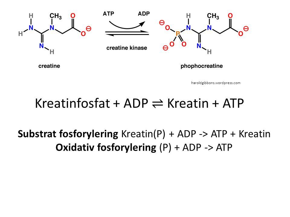 haroldgibbons.wordpress.com Substrat fosforylering Kreatin(P) + ADP -> ATP + Kreatin Oxidativ fosforylering (P) + ADP -> ATP Kreatinfosfat + ADP ⇌ Kre