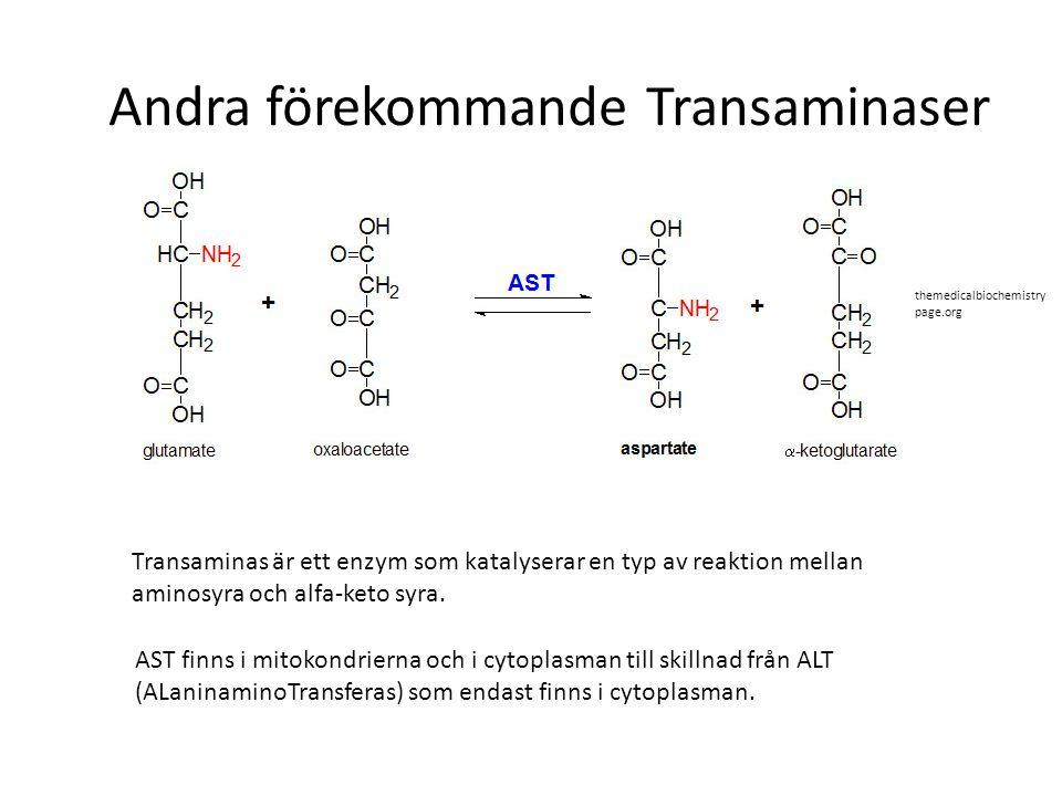 Andra förekommande Transaminaser Transaminas är ett enzym som katalyserar en typ av reaktion mellan aminosyra och alfa-keto syra. AST finns i mitokond