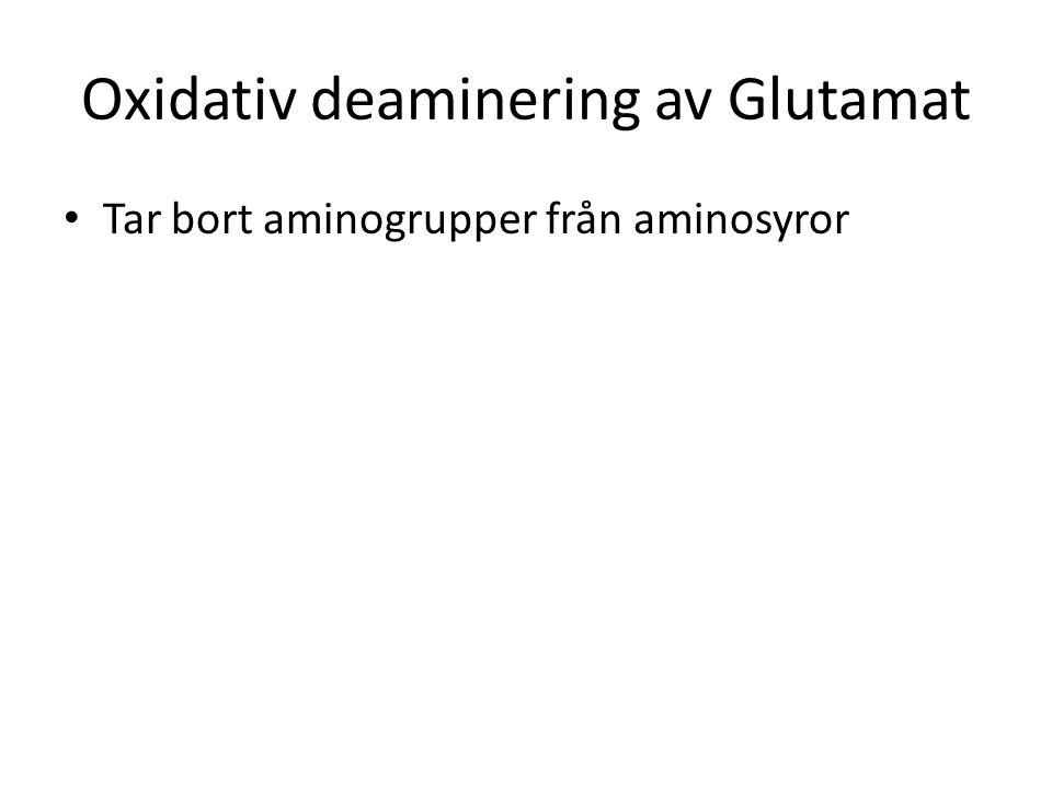 Oxidativ deaminering av Glutamat Tar bort aminogrupper från aminosyror