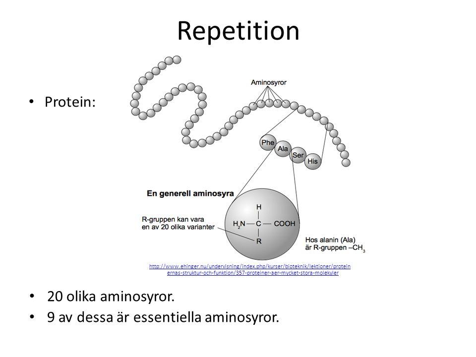 Repetition Protein: 20 olika aminosyror. 9 av dessa är essentiella aminosyror. http://www.ehinger.nu/undervisning/index.php/kurser/bioteknik/lektioner