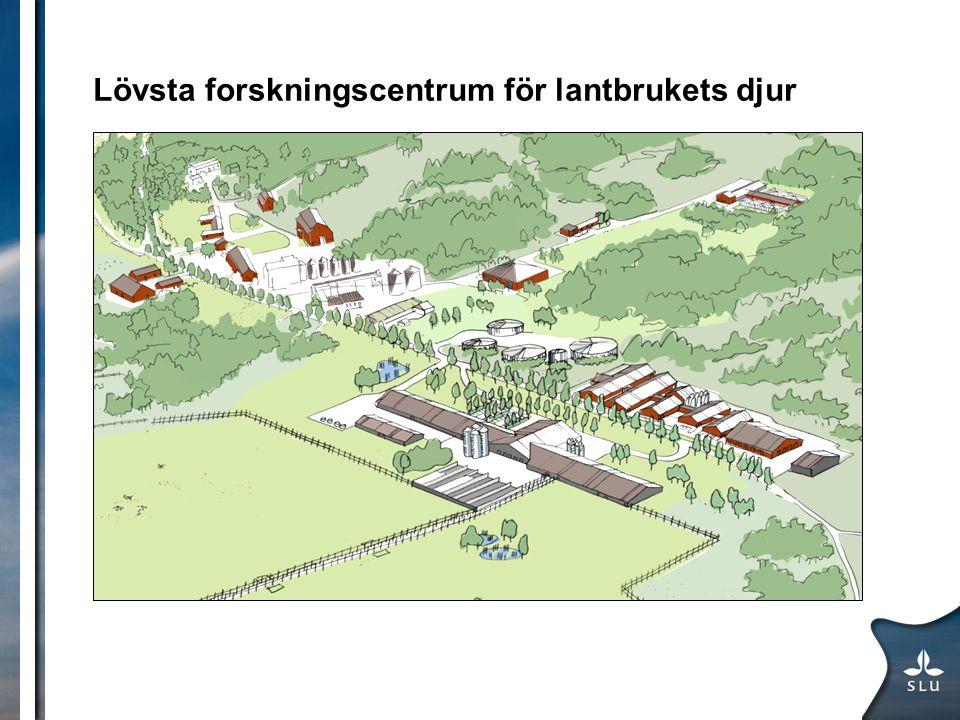 Lövsta forskningscentrum för lantbrukets djur