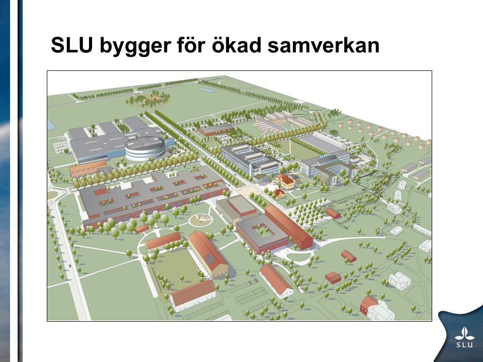 SLU bygger för ökad samverkan Bilder på campusbyggen och Lövsta