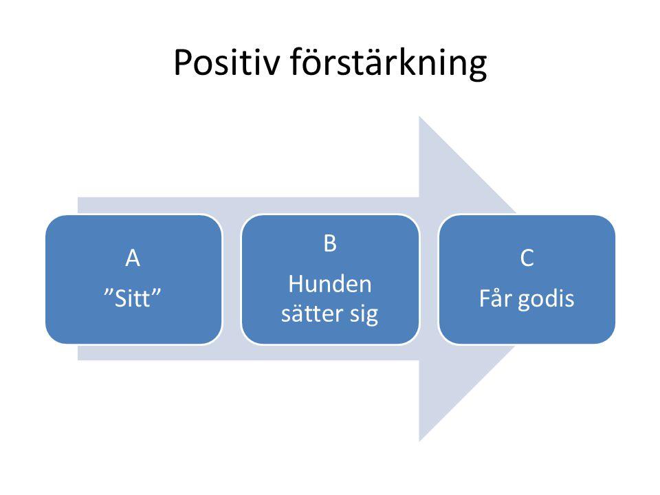 """Positiv förstärkning A """"Sitt"""" B Hunden sätter sig C Får godis"""