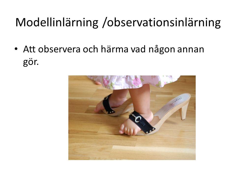 Modellinlärning /observationsinlärning Att observera och härma vad någon annan gör.
