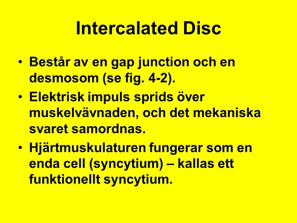 Intercalated Disc Består av en gap junction och en desmosom (se fig. 4-2). Elektrisk impuls sprids över muskelvävnaden, och det mekaniska svaret samor