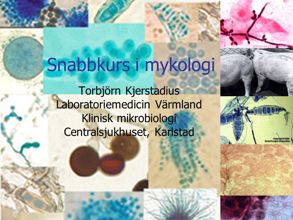 Snabbkurs i mykologi Torbjörn Kjerstadius Laboratoriemedicin Värmland Klinisk mikrobiologi Centralsjukhuset, Karlstad