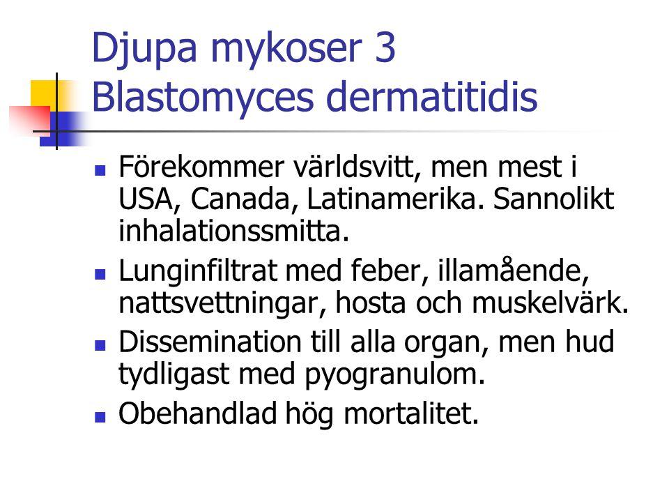 Djupa mykoser 3 Blastomyces dermatitidis Förekommer världsvitt, men mest i USA, Canada, Latinamerika. Sannolikt inhalationssmitta. Lunginfiltrat med f