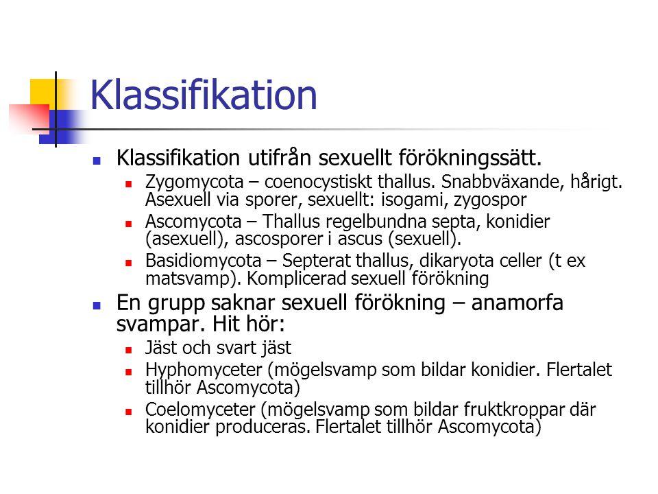 Klassifikation Klassifikation utifrån sexuellt förökningssätt. Zygomycota – coenocystiskt thallus. Snabbväxande, hårigt. Asexuell via sporer, sexuellt