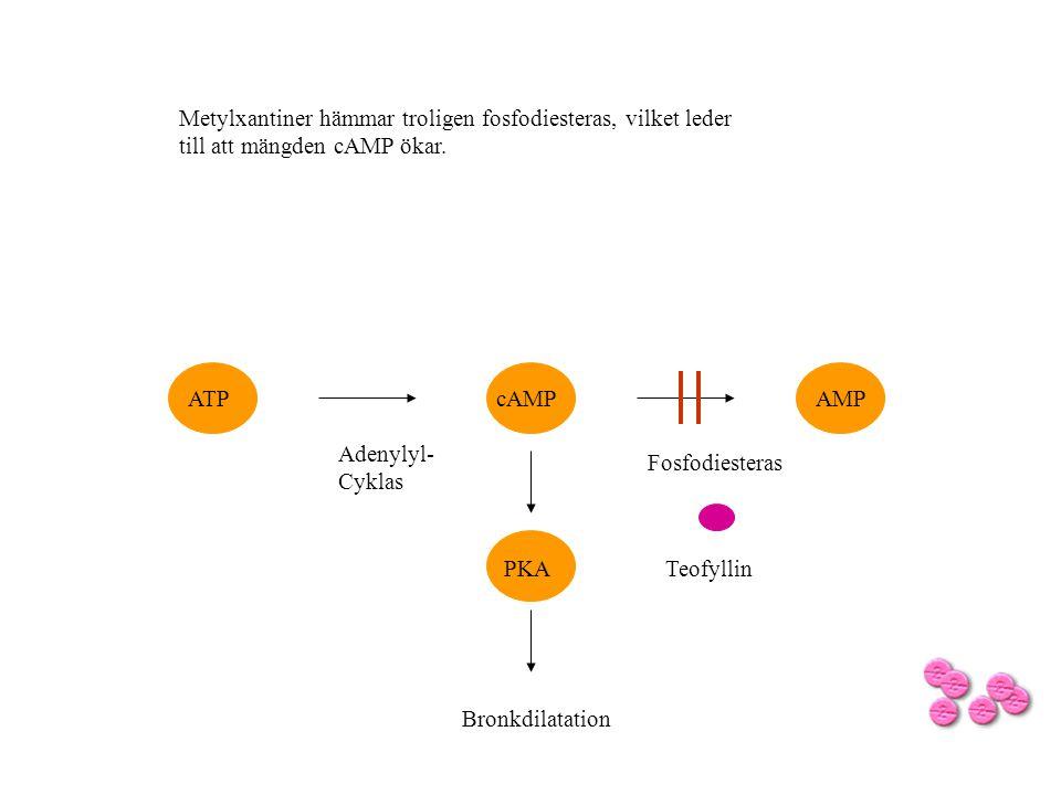 Teofyllin cAMPATPAMP Fosfodiesteras Adenylyl- Cyklas Metylxantiner hämmar troligen fosfodiesteras, vilket leder till att mängden cAMP ökar. PKA Bronkd