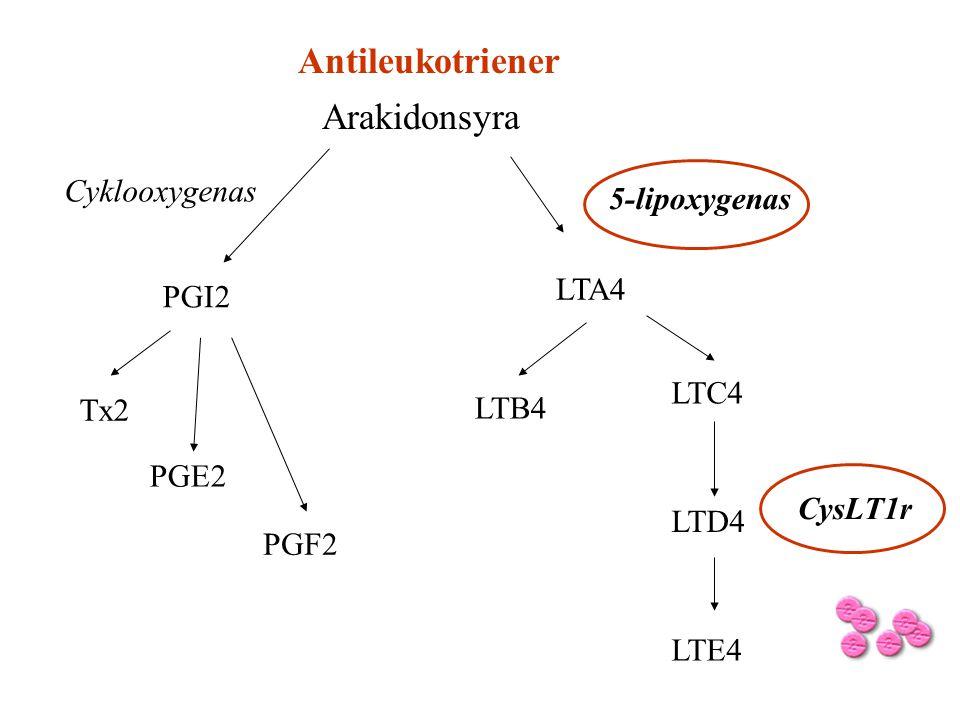 Arakidonsyra PGI2 LTA4 LTD4 LTC4 LTB4 LTE4 Tx2 PGF2 PGE2 CysLT1r Cyklooxygenas 5-lipoxygenas Antileukotriener