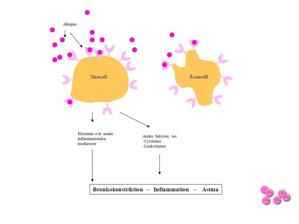 Allergen Histamin och andra inflammatoriska mediatorer Andra faktorer, tex -Cytokiner -Leukotriener Bronkokonstriktion – Inflammation – Astma PAF Trombocyt - aktivering MastcellEosinofil