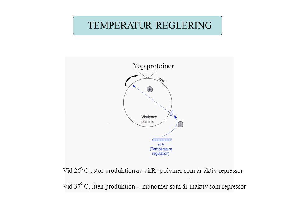 TEMPERATUR REGLERING Yop proteiner Vid 26 C, stor produktion av virR--polymer som är aktiv repressor Vid 37 C, liten produktion -- monomer som är inaktiv som repressor