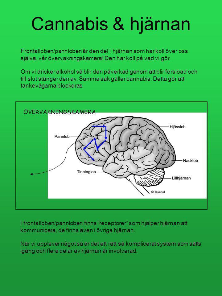Dag 7 Vecka 2 / Fas 1 1.Cannabis och hjärnan + hjärnbilder Varje dag Vecka 2 Hur är det? Hur mår du? Har du rökt / tagit något annat? Hur har du sovit