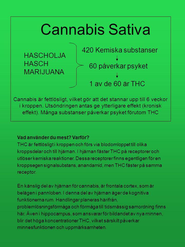 Dag 20 Vecka 6 / Fas 3 1.Avslutning med socialsekreterare 2.Diplom Varje dag Vecka 6 Hur är det.
