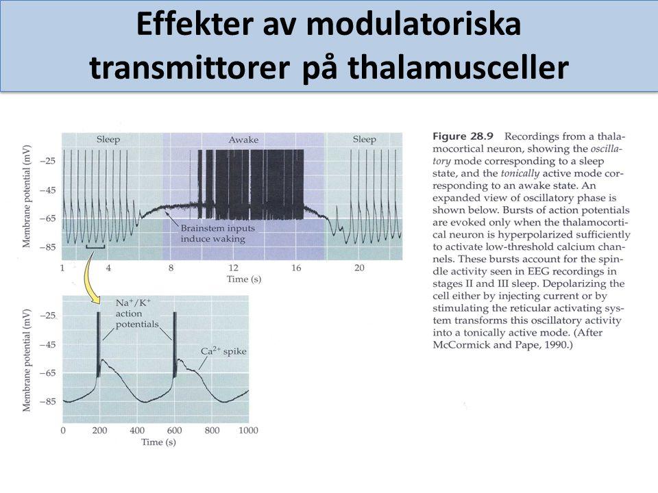 Effekter av modulatoriska transmittorer på thalamusceller