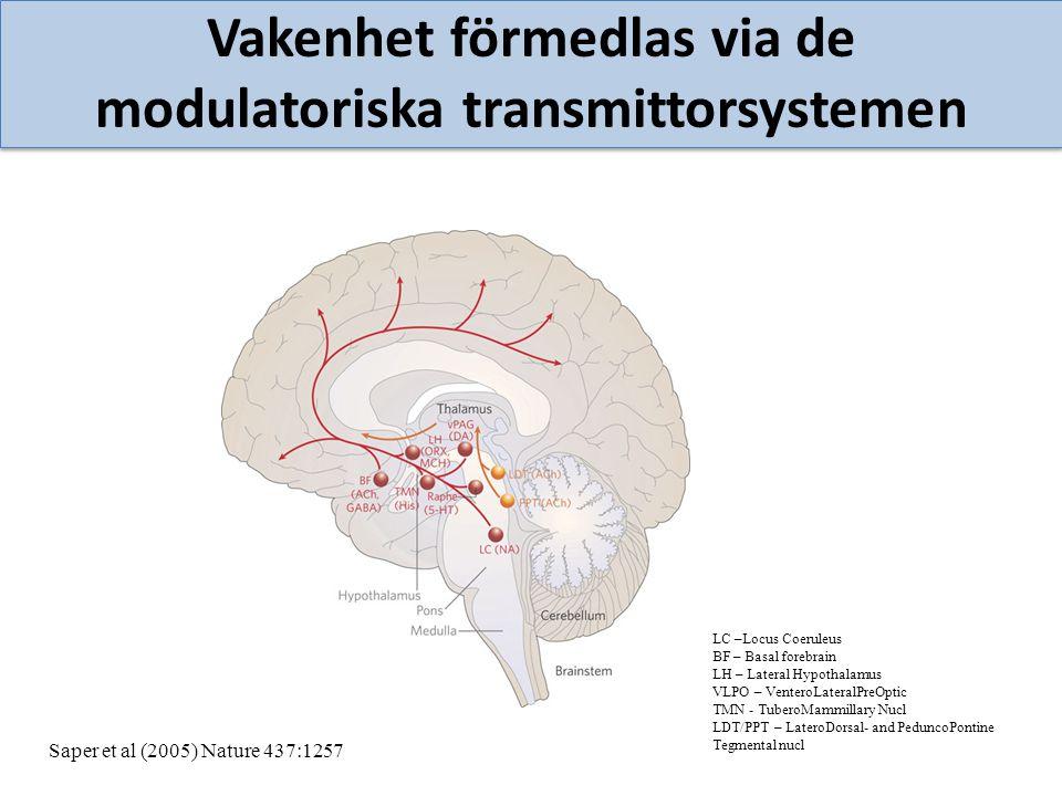 Vakenhet förmedlas via de modulatoriska transmittorsystemen LC –Locus Coeruleus BF – Basal forebrain LH – Lateral Hypothalamus VLPO – VenteroLateralPr