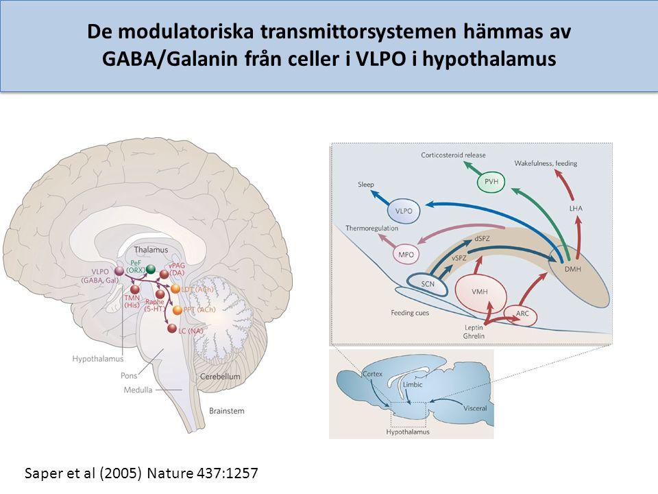 De modulatoriska transmittorsystemen hämmas av GABA/Galanin från celler i VLPO i hypothalamus Saper et al (2005) Nature 437:1257