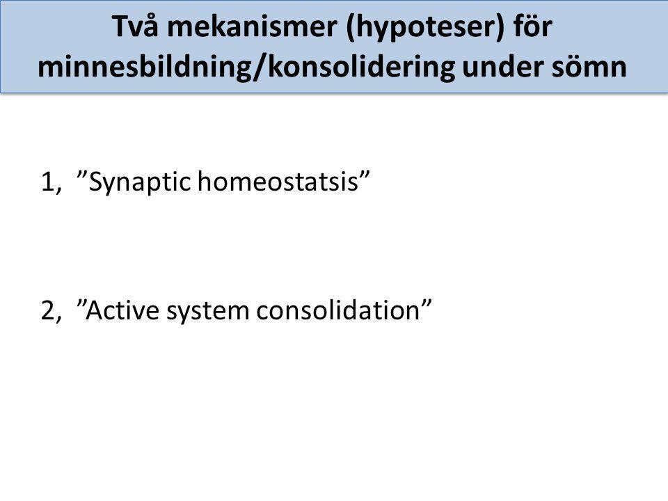 """Två mekanismer (hypoteser) för minnesbildning/konsolidering under sömn 1, """"Synaptic homeostatsis"""" 2, """"Active system consolidation"""""""