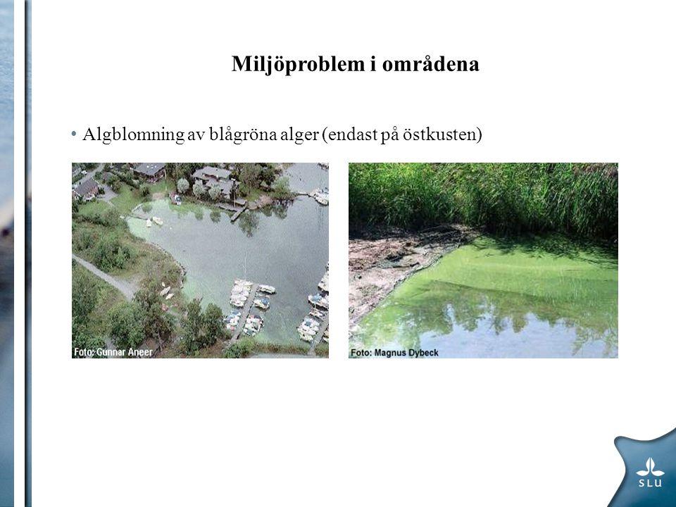 Miljöproblem i områdena Algblomning av blågröna alger (endast på östkusten)