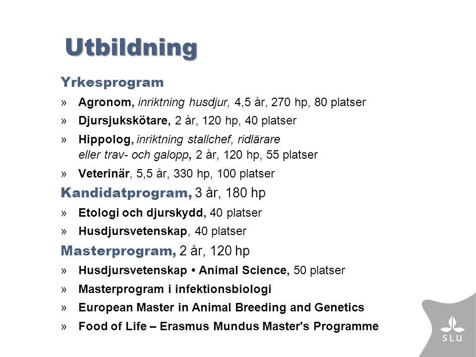 Utbildning Yrkesprogram »Agronom, inriktning husdjur, 4,5 år, 270 hp, 80 platser »Djursjukskötare, 2 år, 120 hp, 40 platser »Hippolog, inriktning stallchef, ridlärare eller trav- och galopp, 2 år, 120 hp, 55 platser »Veterinär, 5,5 år, 330 hp, 100 platser Kandidatprogram, 3 år, 180 hp »Etologi och djurskydd, 40 platser »Husdjursvetenskap, 40 platser Masterprogram, 2 år, 120 hp »Husdjursvetenskap Animal Science, 50 platser »Masterprogram i infektionsbiologi »European Master in Animal Breeding and Genetics »Food of Life – Erasmus Mundus Master s Programme