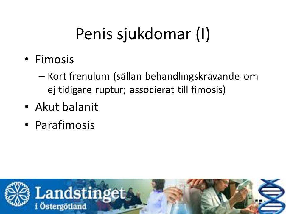 Penis sjukdomar (I) Fimosis – Kort frenulum (sällan behandlingskrävande om ej tidigare ruptur; associerat till fimosis) Akut balanit Parafimosis