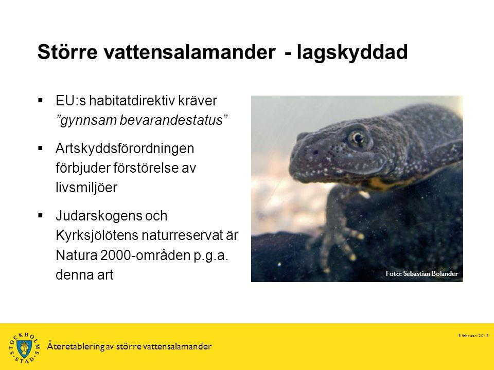 Större vattensalamander - lagskyddad 5 februari 2013 Återetablering av större vattensalamander  EU:s habitatdirektiv kräver gynnsam bevarandestatus  Artskyddsförordningen förbjuder förstörelse av livsmiljöer  Judarskogens och Kyrksjölötens naturreservat är Natura 2000-områden p.g.a.