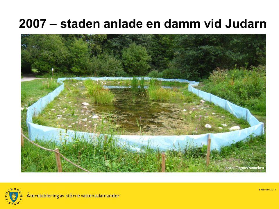 5 februari 2013 Återetablering av större vattensalamander 2007 – staden anlade en damm vid Judarn Foto: Magnus Sannebro