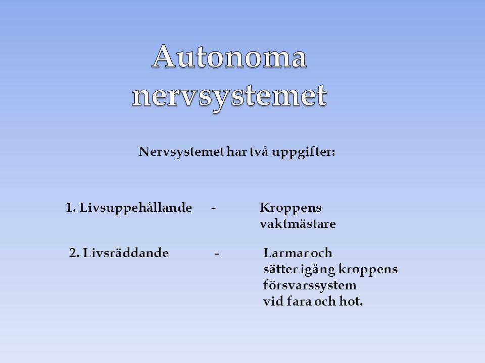 Nervsystemet har två uppgifter: 1. Livsuppehållande-Kroppens vaktmästare 2. Livsräddande-Larmar och sätter igång kroppens försvarssystem vid fara och