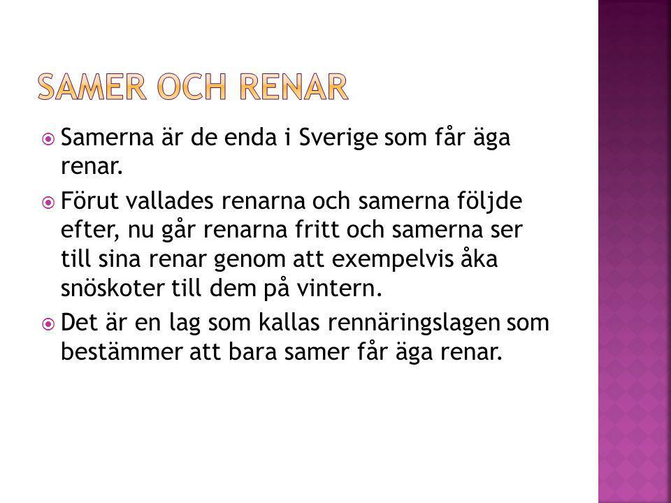  Samerna är de enda i Sverige som får äga renar.