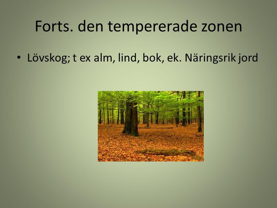 Forts. den tempererade zonen Lövskog; t ex alm, lind, bok, ek. Näringsrik jord