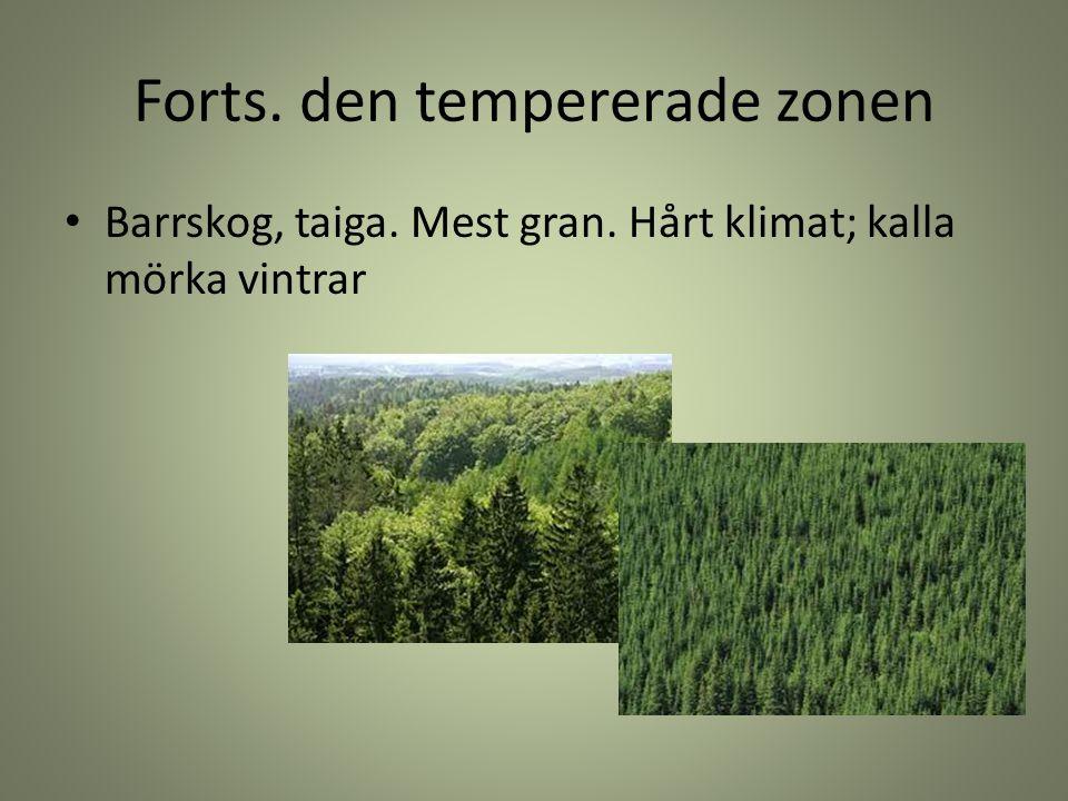 Forts. den tempererade zonen Barrskog, taiga. Mest gran. Hårt klimat; kalla mörka vintrar
