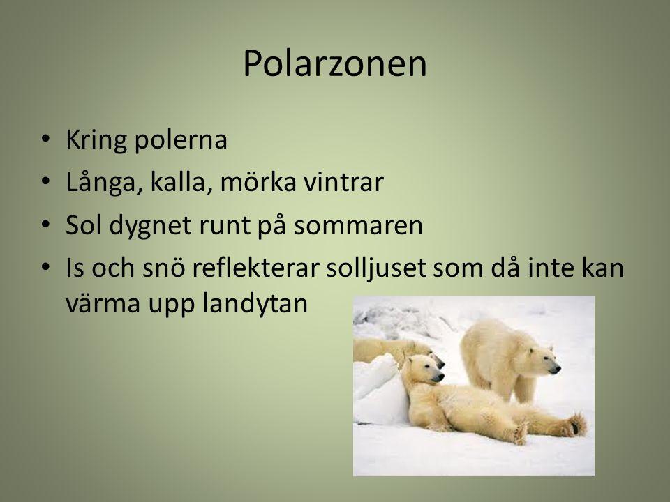 Polarzonen Kring polerna Långa, kalla, mörka vintrar Sol dygnet runt på sommaren Is och snö reflekterar solljuset som då inte kan värma upp landytan