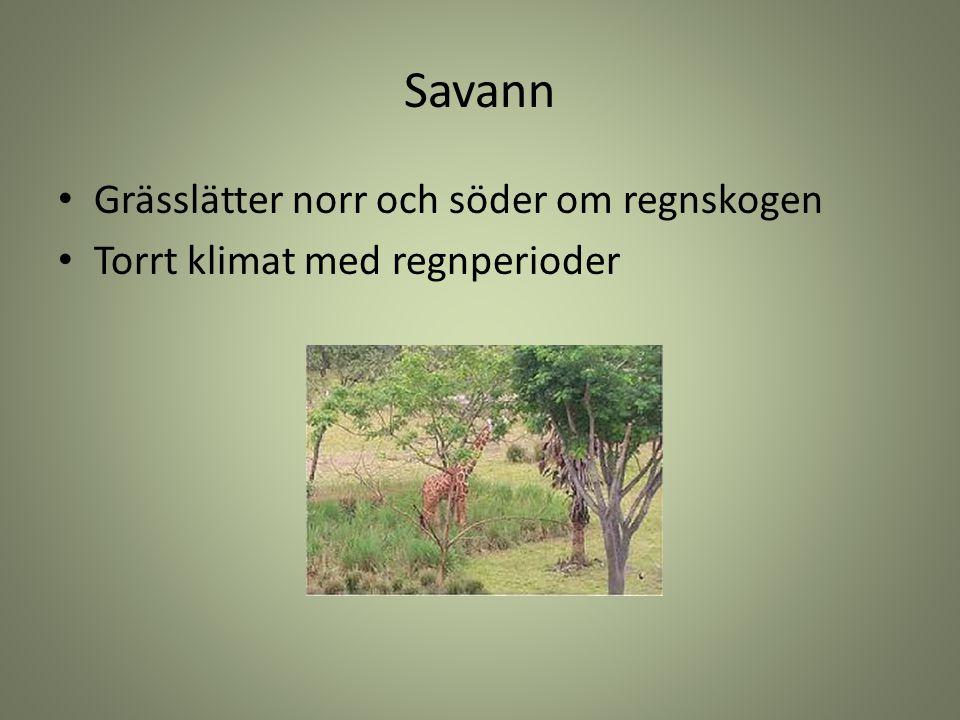 Savann Grässlätter norr och söder om regnskogen Torrt klimat med regnperioder