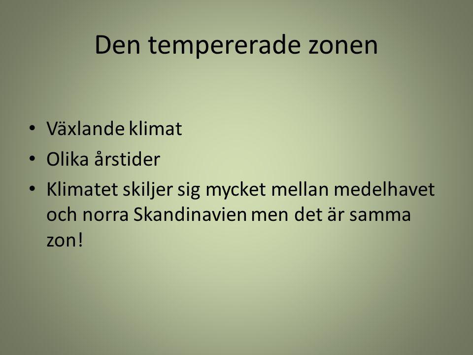 Den tempererade zonen Växlande klimat Olika årstider Klimatet skiljer sig mycket mellan medelhavet och norra Skandinavien men det är samma zon!
