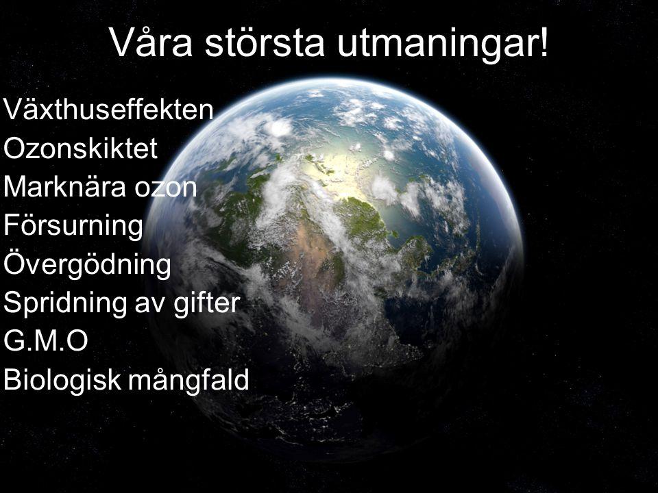 Våra största utmaningar! Växthuseffekten Ozonskiktet Marknära ozon Försurning Övergödning Spridning av gifter G.M.O Biologisk mångfald