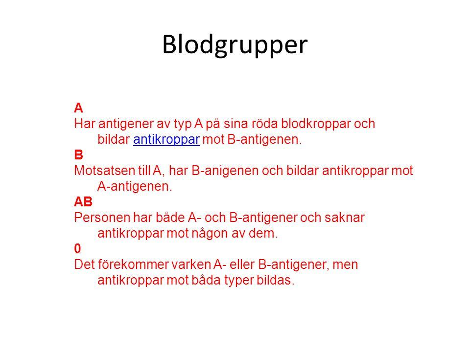Blodgrupper A Har antigener av typ A på sina röda blodkroppar och bildar antikroppar mot B-antigenen.antikroppar B Motsatsen till A, har B-anigenen och bildar antikroppar mot A-antigenen.